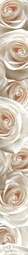 Бордюр Березакерамика Камелия 50х5.4 см