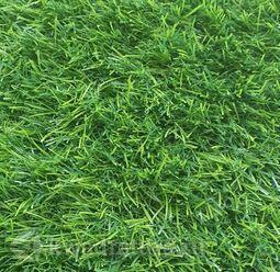 Искусственная трава Pretty Grass 35 2х1,9 = 3,8 м2